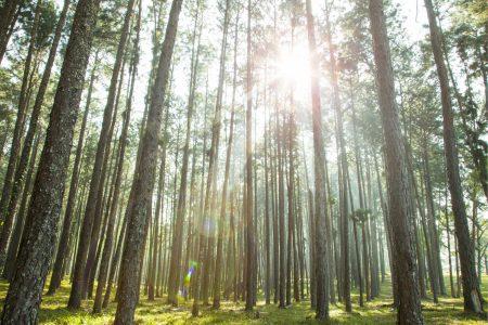 Understanding ESG Investing