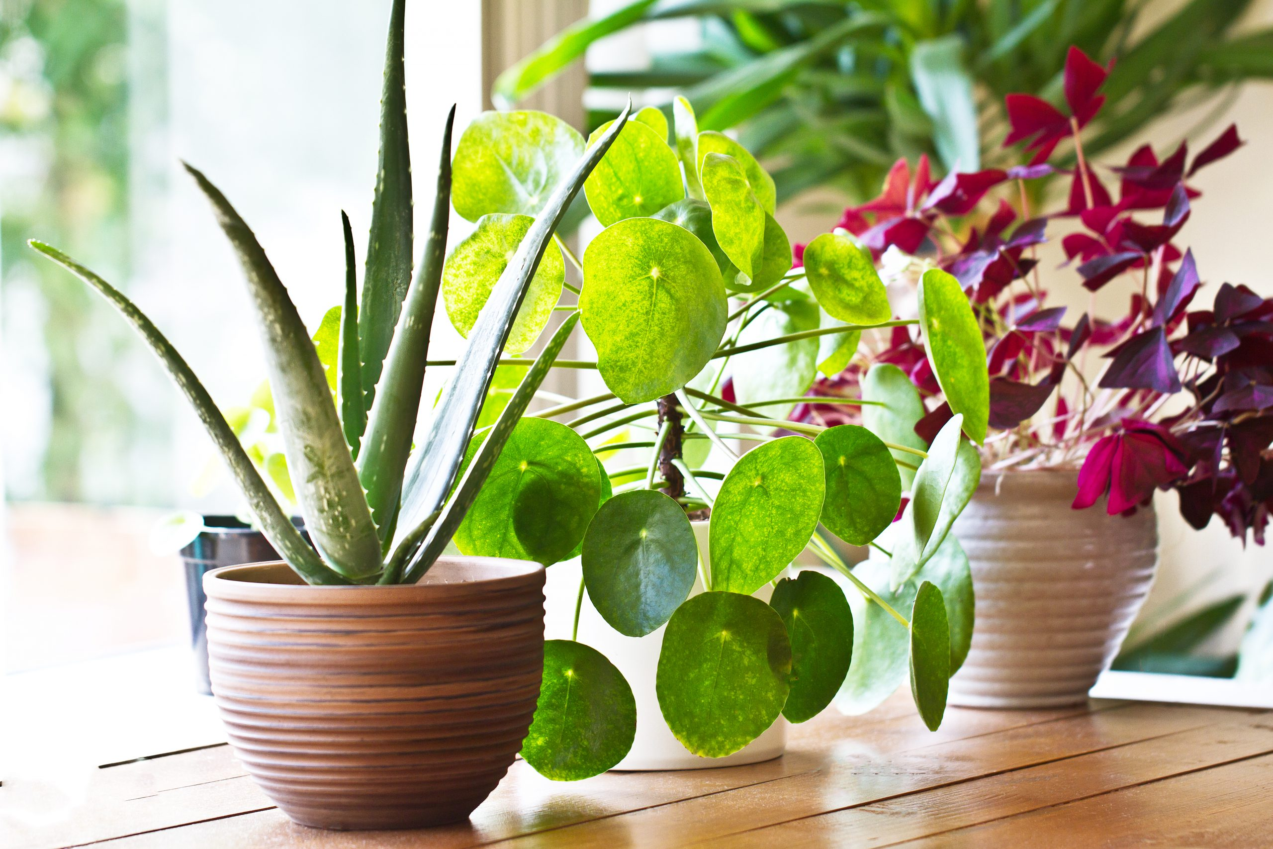 5 reasons plants can mean healthier homes