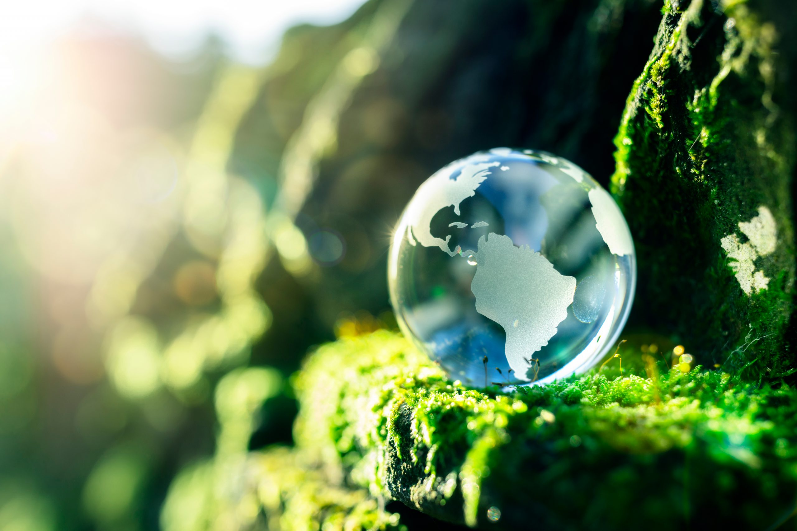 World Environment Day: Why restoring ecosystems is important
